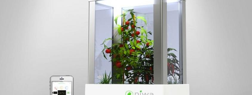 Niwa – Rekordtermés akár a lakásban is